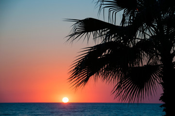 Sunset beach, evening sea, palm trees