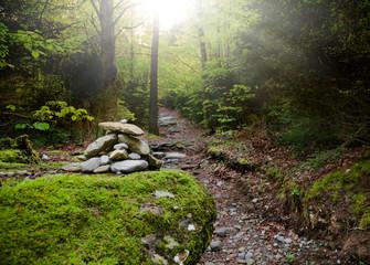 Camino en el interior del bosque
