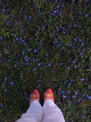 petals on grass
