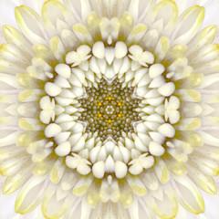 White Mandala Concentric Flower Center Kaleidoscope