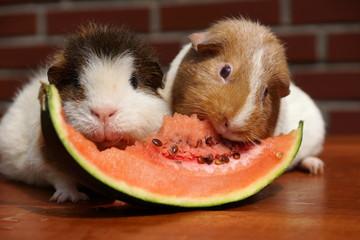 Melonenschmaus