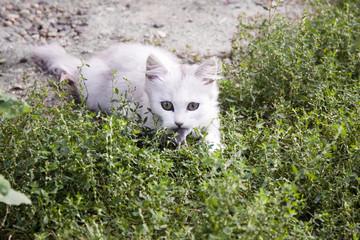 Кошка ловит мышку