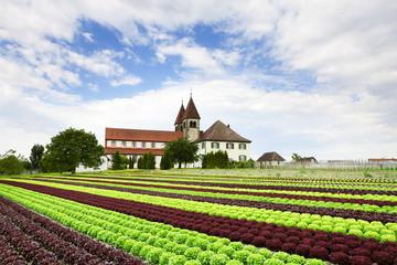Salatfeld Reichenau