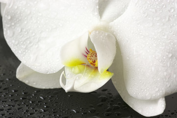 Orchid close-up