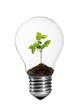canvas print picture - Kleine Grünpflanze in einer Glühlampe