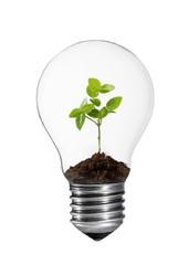 Kleine Grünpflanze in einer Glühlampe