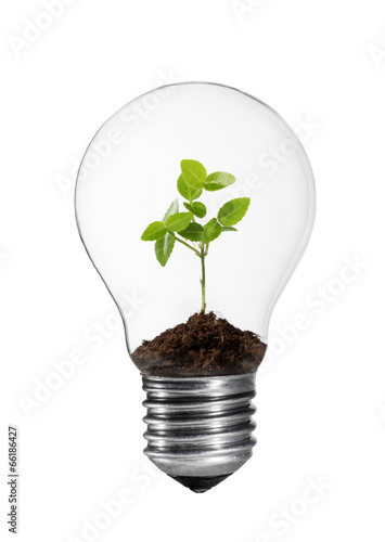 canvas print picture Kleine Grünpflanze in einer Glühlampe