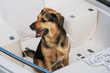 Dog sitting in well of small cabin cruiser