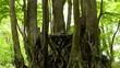 雨の日の森_13