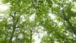 雨の日の森_10