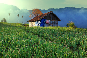 Field in Indonesia