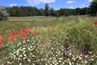 wild flower's meadow in forest