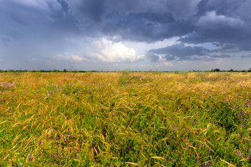 thunderstorm in steppe