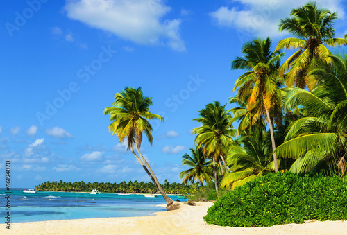 Paradise beach with palm trees on white sand - 66194870