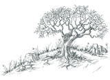 Fototapety Olive tree graphic