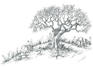 Olive tree graphic