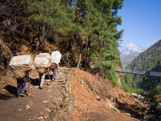 Unrecognizable Sherpa Porters at Work, Everest Region, Nepal