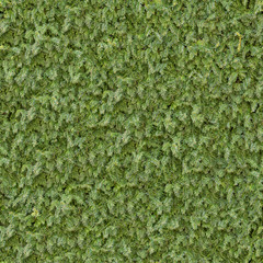 Coniferous Green Surface. Seamless Texture.