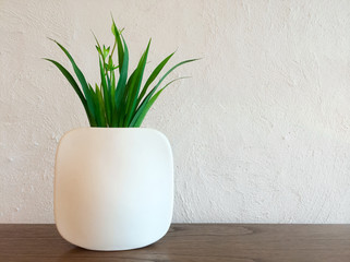 Decorative plant in white vase