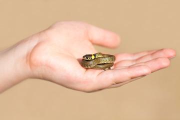 Little snake in male hand