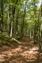 Chemin en Forêt des vosges