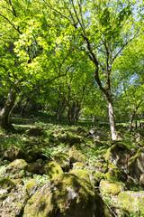 Forêt et mousse sur les rochers