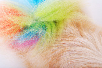 dog hair style colorful tail, Animal fur