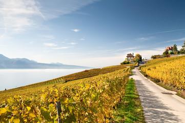 Route dans les vignobles du Lavaux