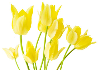 Spring bouquet of yellow tulips on the white background.