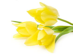 Spring bouquet of yellow tulips isolated on the white