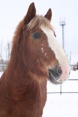 морда лошади