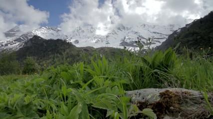 Montagne avec foret et neige
