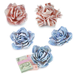 money flower on white background