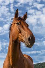 cheval brun