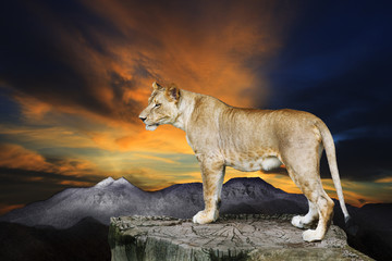 african lioness female standing on rock cliff against beautiful