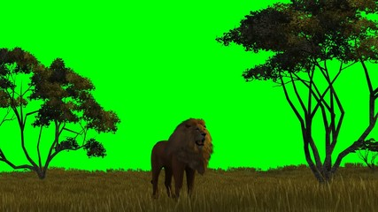lion on  green screen