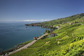 View of Lake Geneva over the Lavaux vines