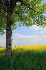 Baum in Naturlandschaft