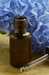 Hydrangea Hortensien アジサイ属 Hortensja Гортензия