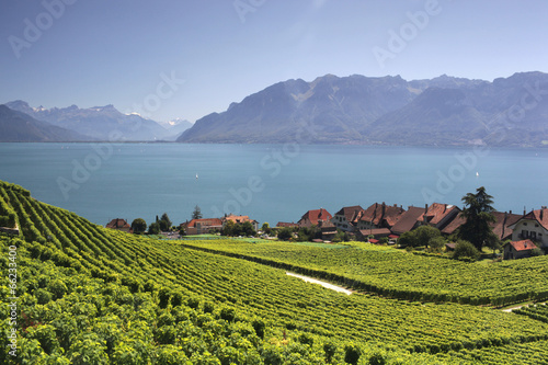 View over lake Geneva from the Lavaux vines. - 66233400