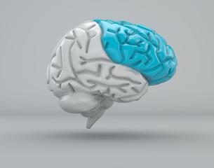 Cervello lobo frontale divisione