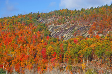 Fall foliage covering Mountain hillside