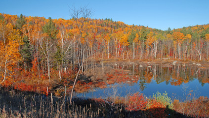 Fall Colors - Autumn Leaves reflecting in lake