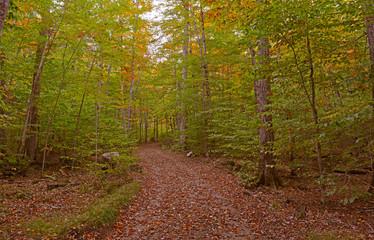 Fall Foliage in the East Coast, USA