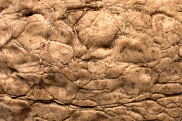 Walnut texture, closeup