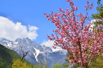 The Peak of Alpine Mountain