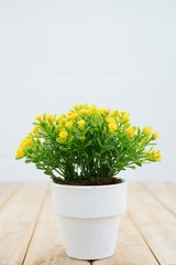 Yellow flower for home decoration