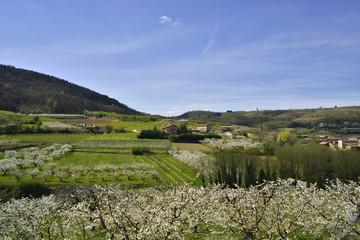 l'Ardèche en pommiers de fleurs blanches