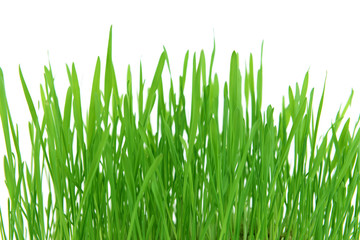 Beautiful spring grass on white background © Africa Studio