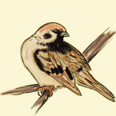 hand drawn tree sparrow on branch, passer montanus